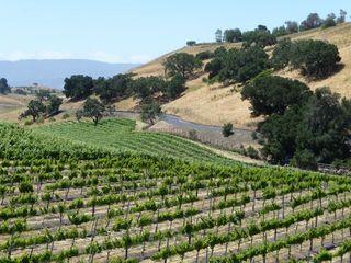 Ballard vineyard